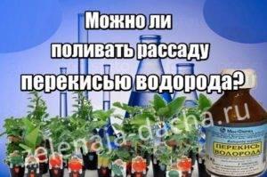 Перекись водорода для растений и семян: свойства, когда целесообразна, рецепты
