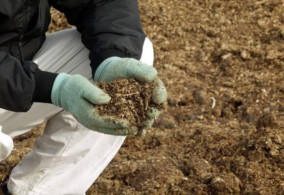 Чем подкормить кабачки на открытом грунте и в теплице: виды удобрений
