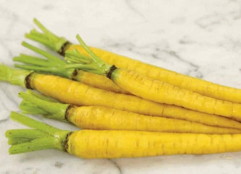 Желтая морковь: описание, особенности и использование сорта