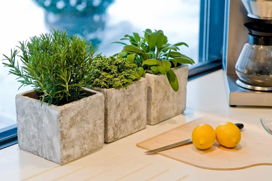 Зелень на подоконнике: выращивание без земли, досвечивания и семян