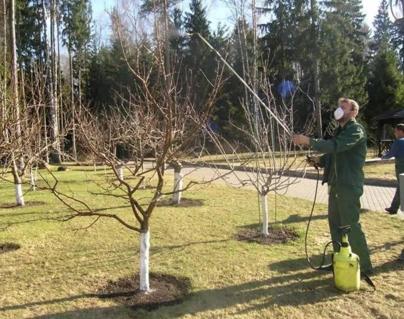 Обработка яблонь осенью от вредителей и болезней, чем опрыскивать - советы профессионалов