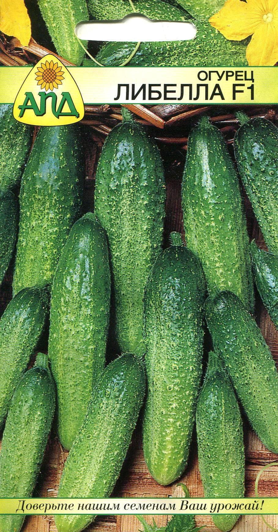 Огурцы либелла: описание гибрида, фото кустов и плодов, отзывы фермеров о выращивании либелле (f1)