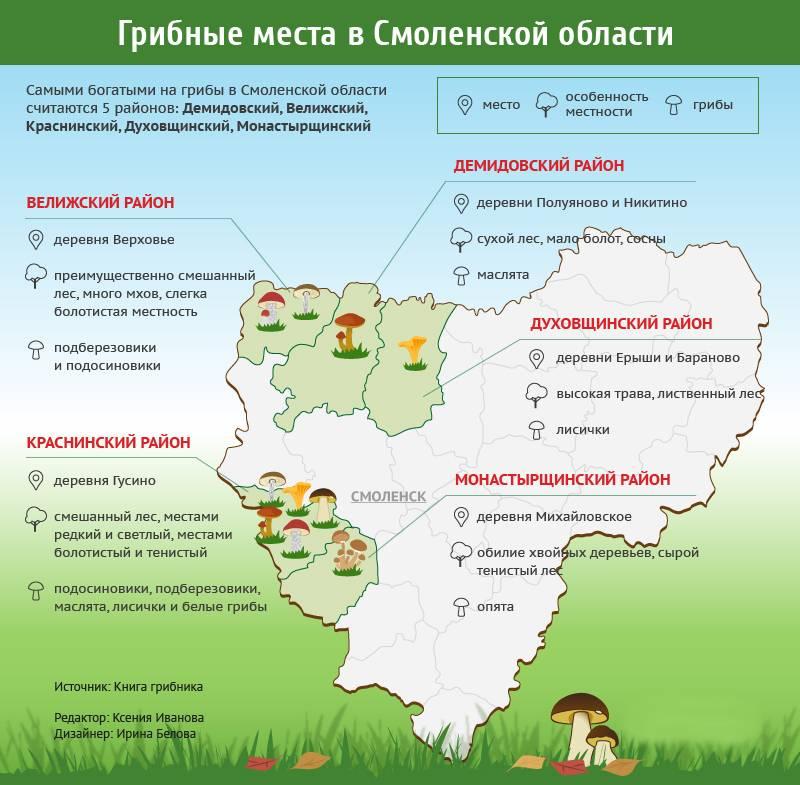 Грибы в самарской области 2020: карта, грибные места, фото