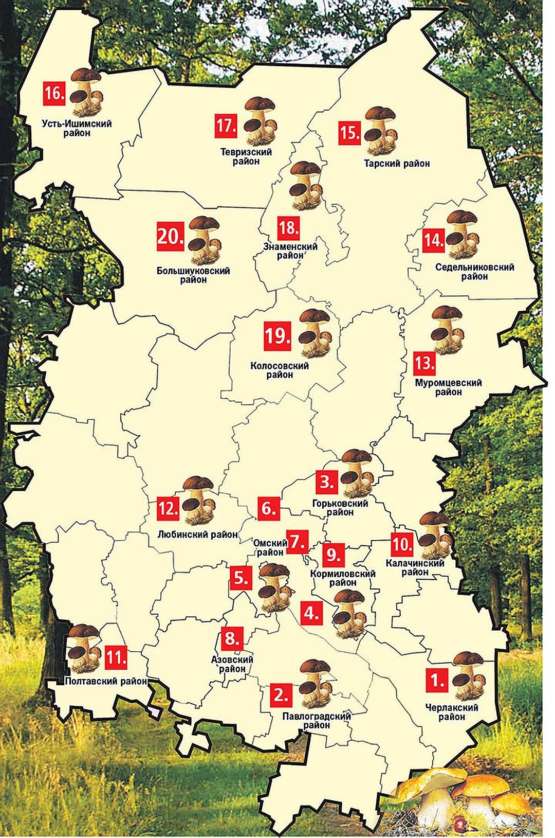 Грибы и грибные места 2020 ульяновской области