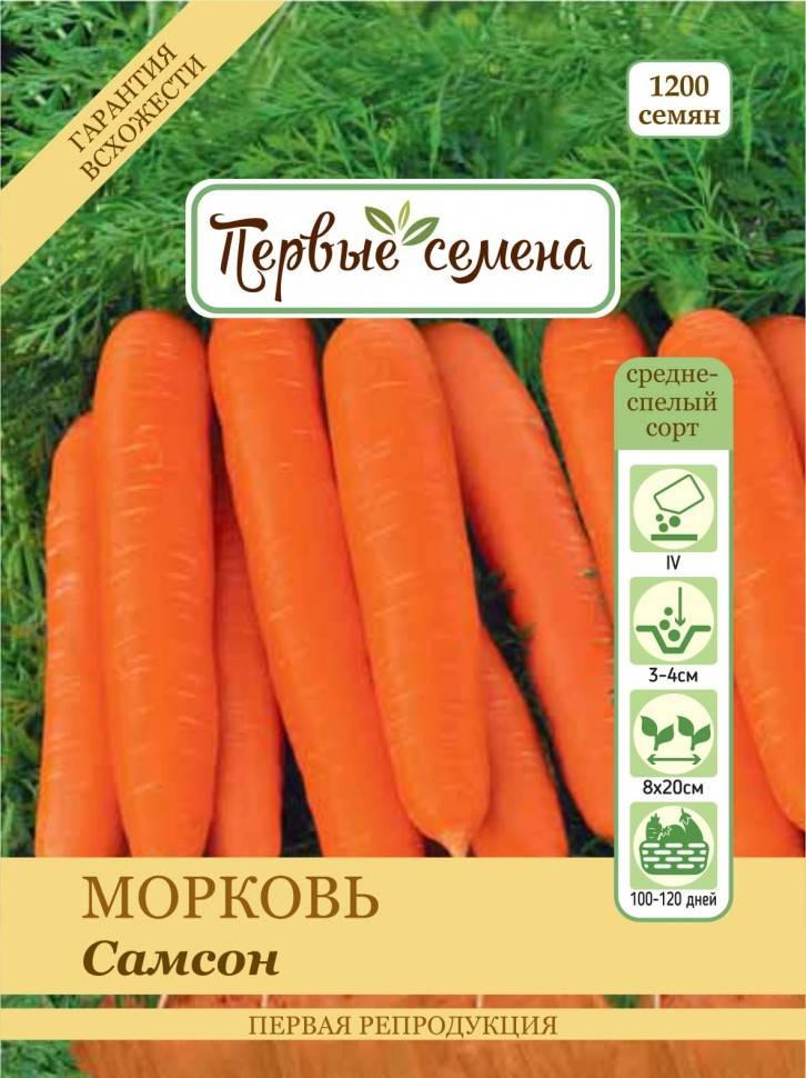 Морковь-силач самсон: что это за сорт и как его выращивать?