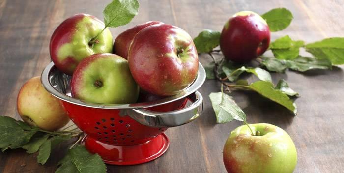 Яблочные косточки: польза и вред   польза и вред
