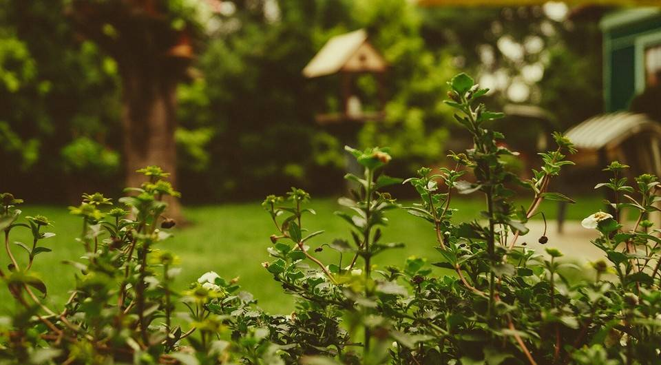 Как избавиться от кротов на садовом участке: самые простые способы