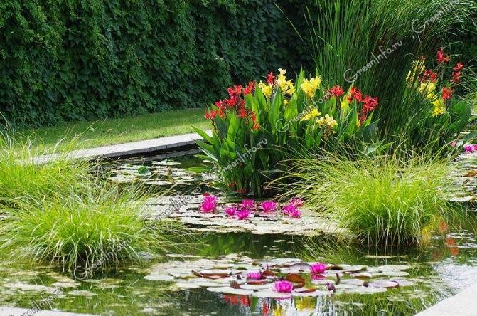 Какие растения выбрать для водоема в саду. как и когда их сажать
