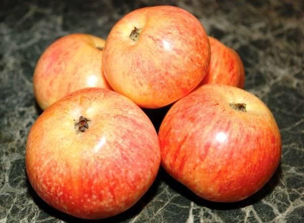 Описание сорта яблони подарок графскому: фото яблок, важные характеристики, урожайность с дерева