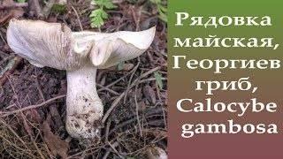 Особенности майского гриба
