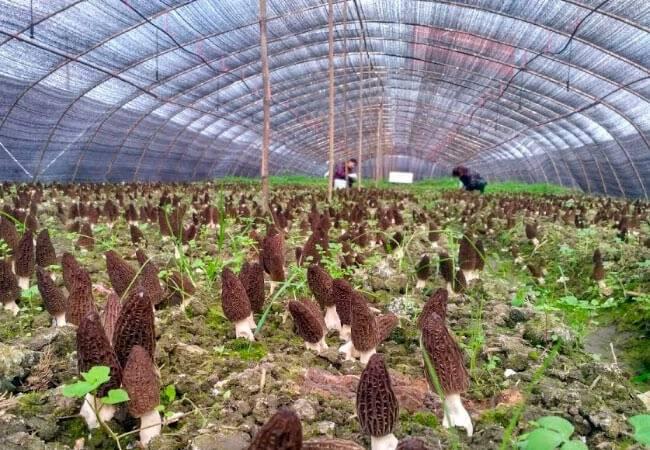 Как выращивать и хранить белые грибы