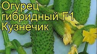 Огурец кузя f1: описание сорта, посадка, уход, фото, отзывы