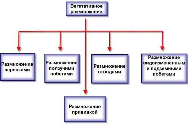 Урок 5: размножение растений - 100urokov.ru