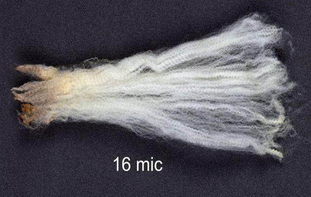 Мериносовая шерсть: изделия из шерсти мериноса для детей и взрослых