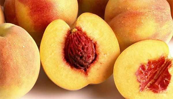 Описание и характеристика персикового дерева сорта редхейвен