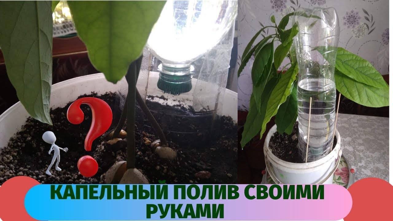 Автополив для комнатных растений - системы и приспособление