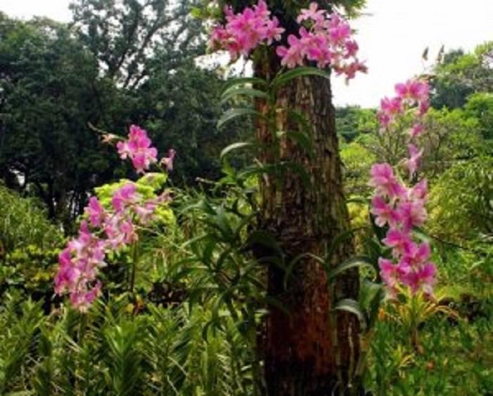 Покупная кора для орхидей - эти удивительные орхидеи - страна мам