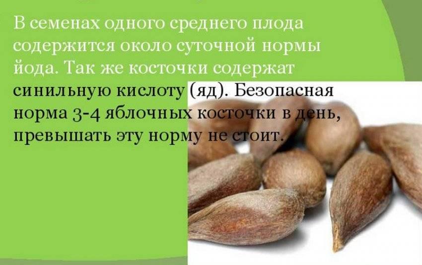 Семечки яблок: польза и вред, ядовитые ли