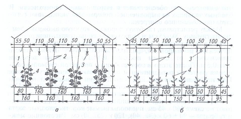 На каком расстоянии сажать огурцы при посадке в открытый грунт и теплицу