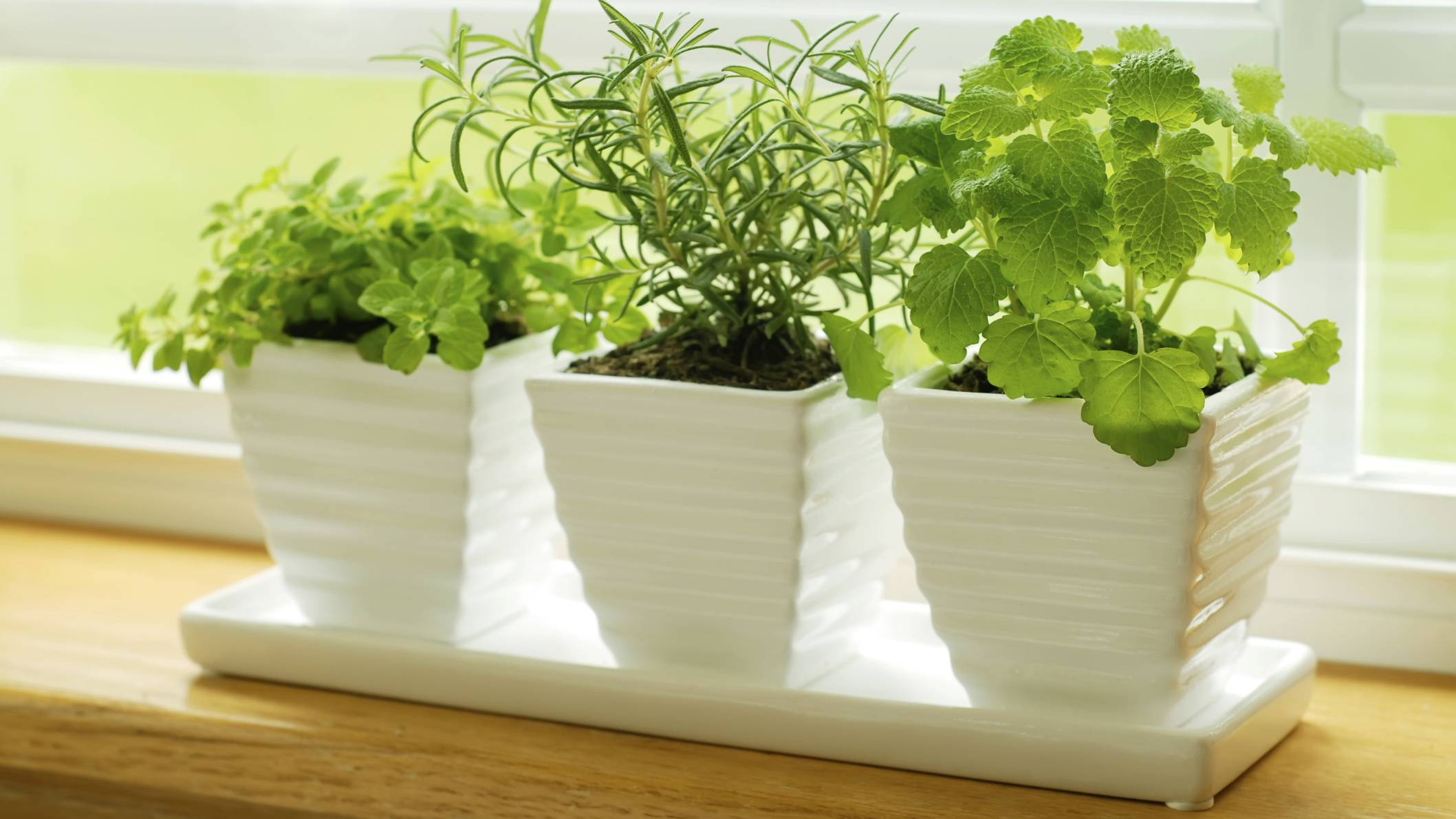 Как и какую зелень можно выращивать дома на подоконнике круглый год (зимой): советы для начинающих