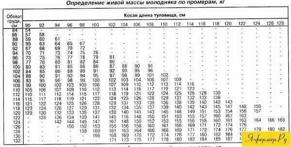 Быки: как определить живой вес коровы без весов и по таблице