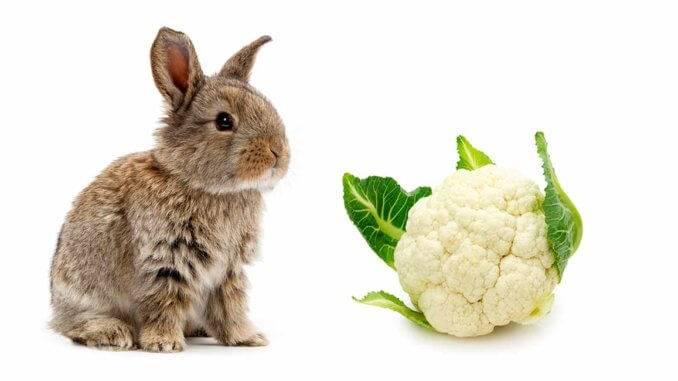 Можно ли давать кроликам листы капусты