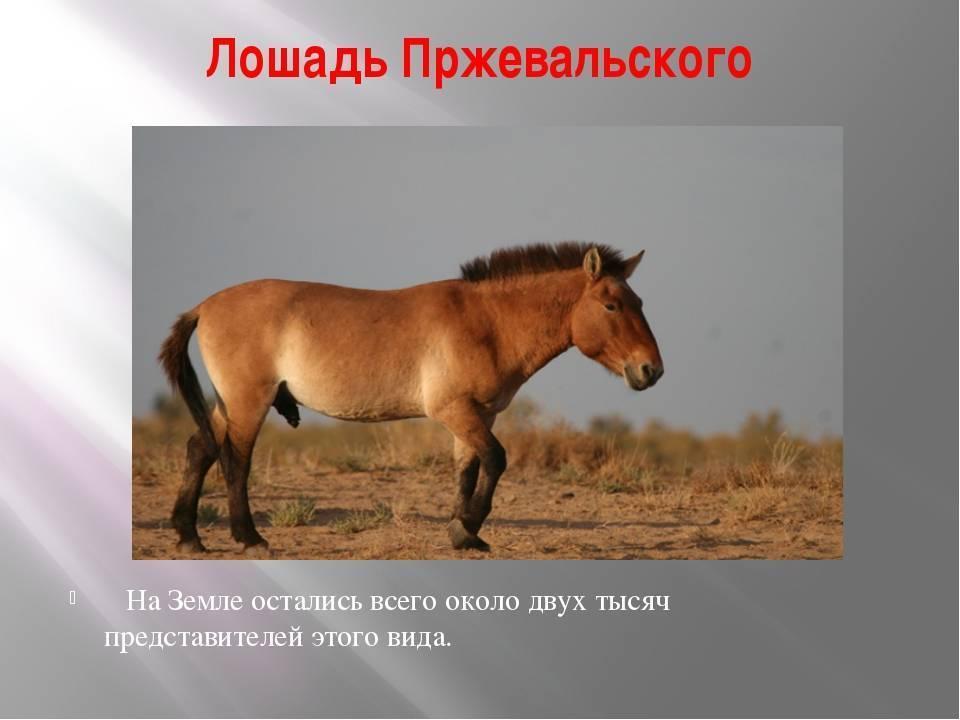 Топ-10 интересных фактов о лошадях