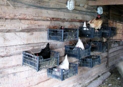 Как сделать гнездо для курицы несушки своими руками с яйцесборником. о чём важно знать | дачная жизнь
