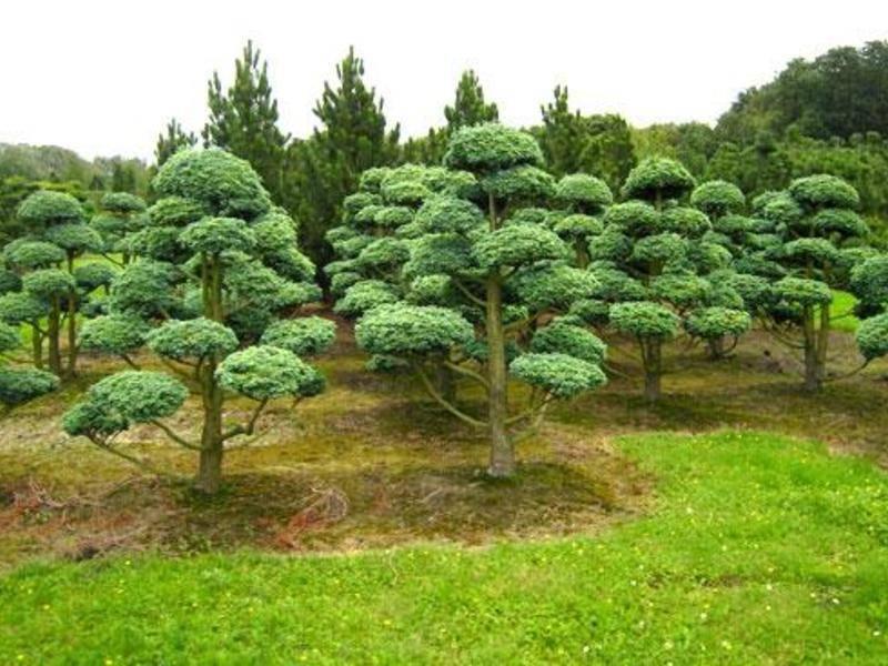 Декоративные деревья для сада. фото с названиями