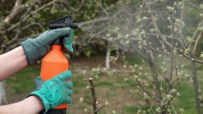 Бордосская жидкость –  инструкция по применению в садоводстве, как приготовить бордосскую смесь