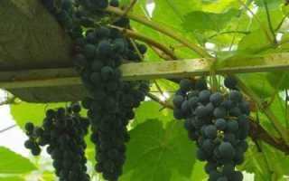 Подарок магарача – сайт о винограде и вине