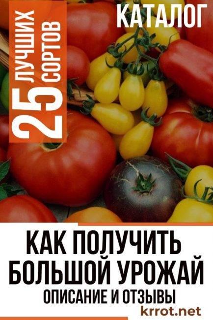 Томат «черный крым» или «черный крымский»: описание сорта, фото и рекомендации по выращиванию помидоры русский фермер