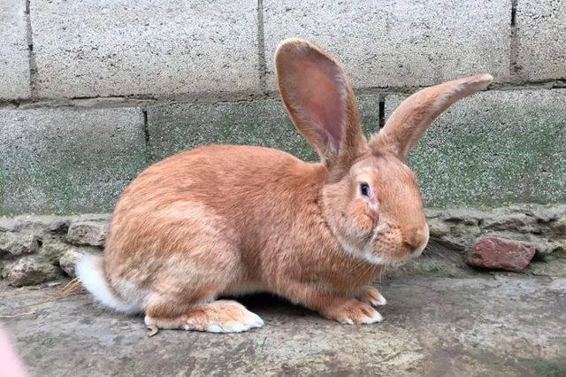 Как правильно в домашних условиях откормить кроликов на мясо - мыдачники