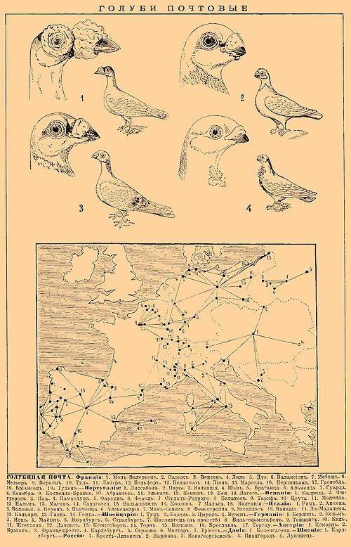 Голубиная почта — википедия. что такое голубиная почта