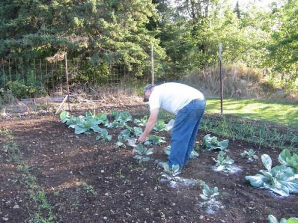 Можно ли подкормить дрожжами морковь, растущую в открытом грунте: как правильно выполнять полив таким удобрением, а также рецепты растворов, плюсы и минусы метода русский фермер