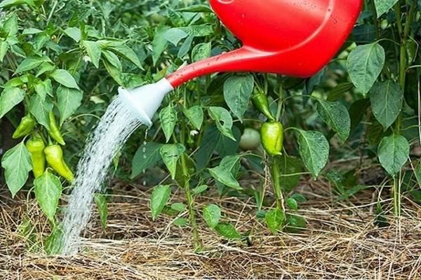Йод для рассады помидор и перца – пропорции и когда поливать