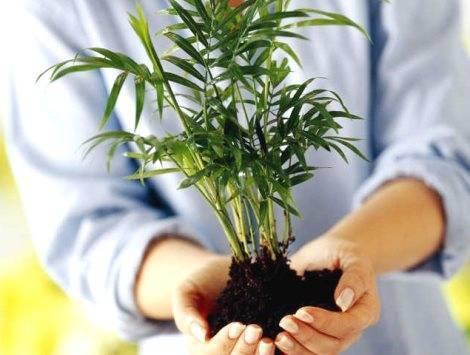 Как и когда пересаживать комнатные растения осенью?