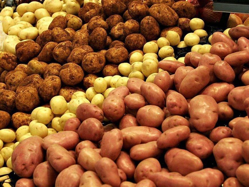 ᐉ сорт картофеля «розалинд» – описание и фото - roza-zanoza.ru