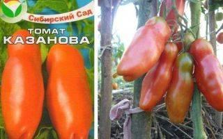 Томат казанова: характеристика и описание сорта, урожайность и отзывы фото кто сажал