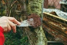 Как сделать садовый вар своими руками: состав и рецепты