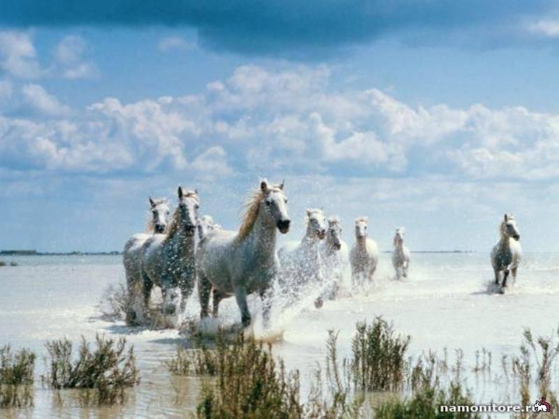 Самые интересные факты о лошадях   мои лошадки