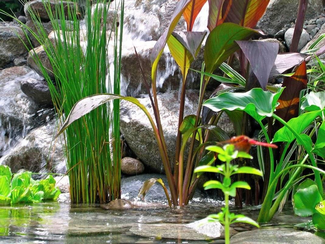 Топ-13 водных растений для пруда на даче